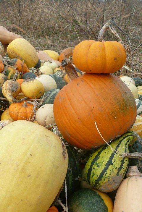 pumpkin picking near me