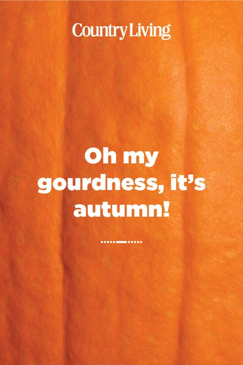 oh my gourdness, it's autumn