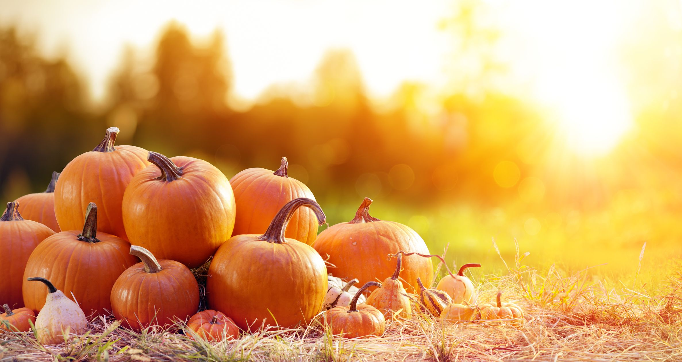 35 Pumpkin Quotes and Puns That Are Fa-Boo-Lous