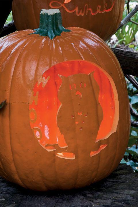 pumpkin stencils whoo is the wisest pumpkin