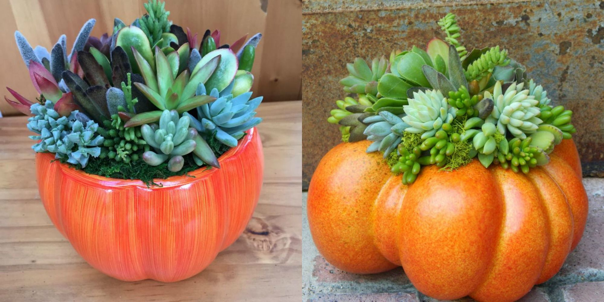 Etsy Is Selling The Cutest Succulent Pumpkin Centerpieces To Get Your Home Ready For Fall