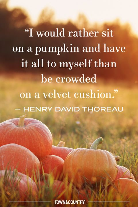 pumpkin patch quote