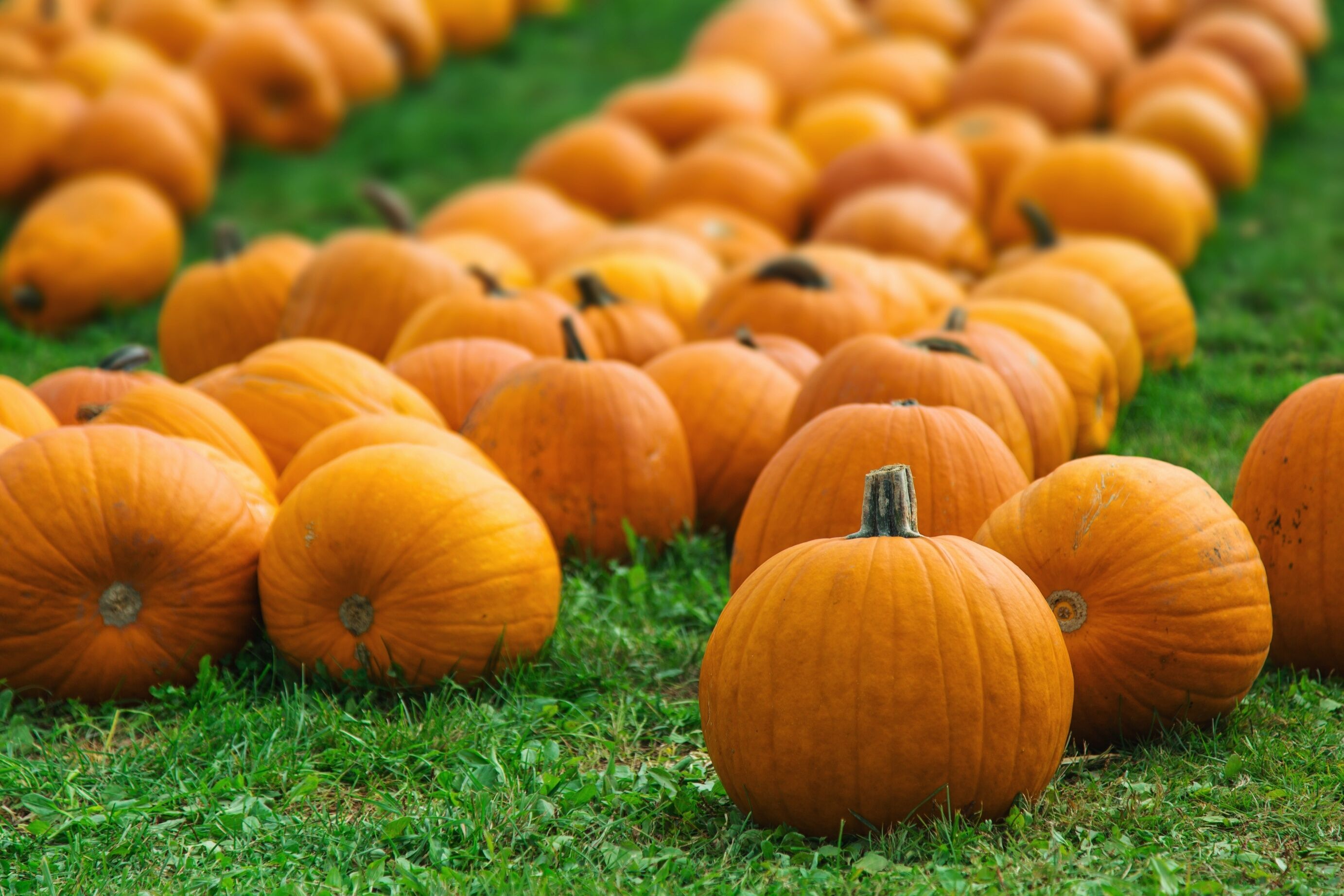 The 9 Best Pumpkin Patches Near NYC