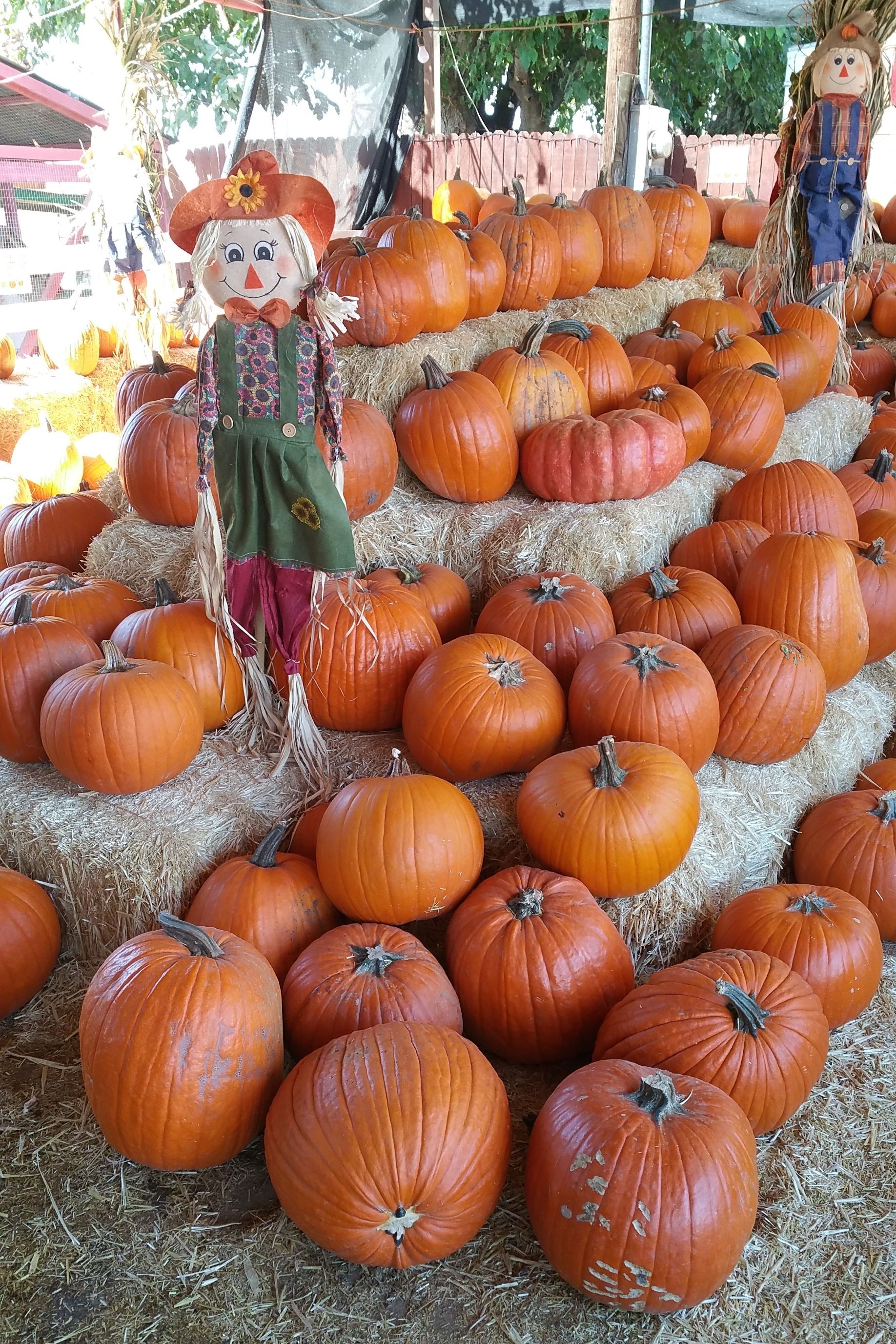 Pumpkin Patch Near Me - Tolmachoff Farms