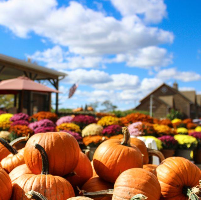pumpkins and mums at market
