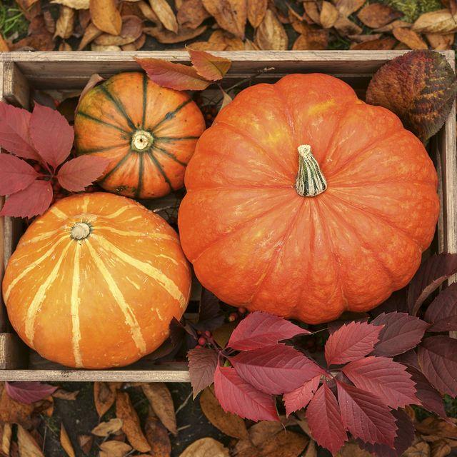 fall puns