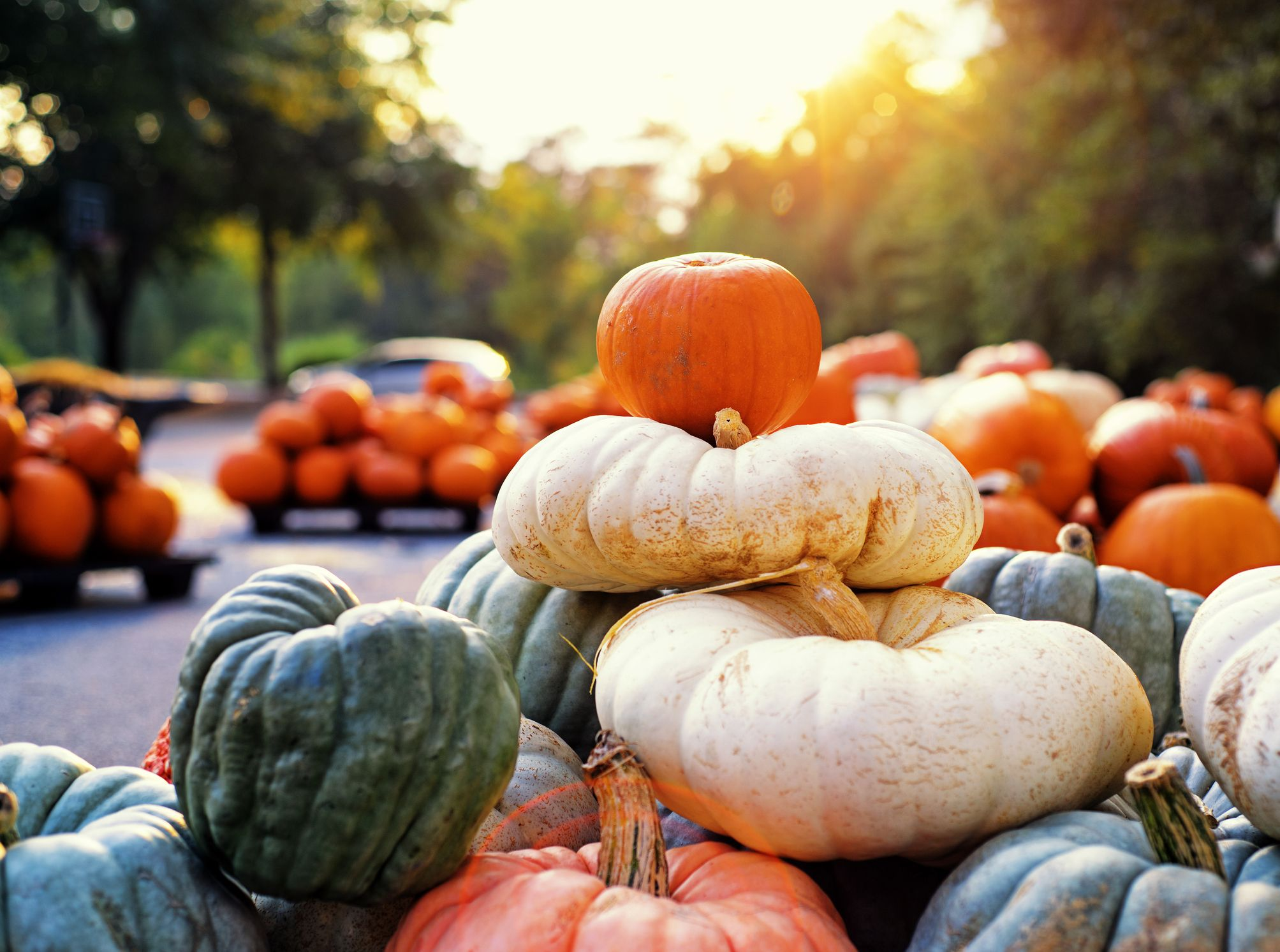 5 of the best pumpkin farms near London to visit this autumn