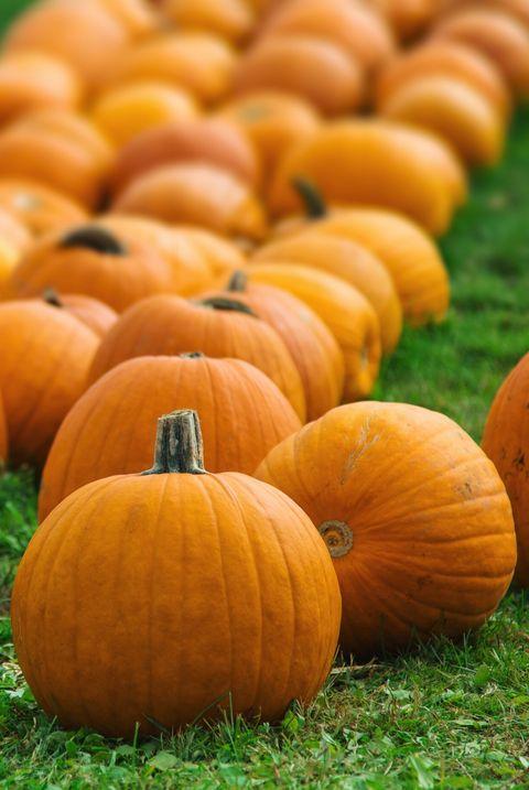 Pumpkin Patch Near Me 50 Best Pumpkin Farms In America