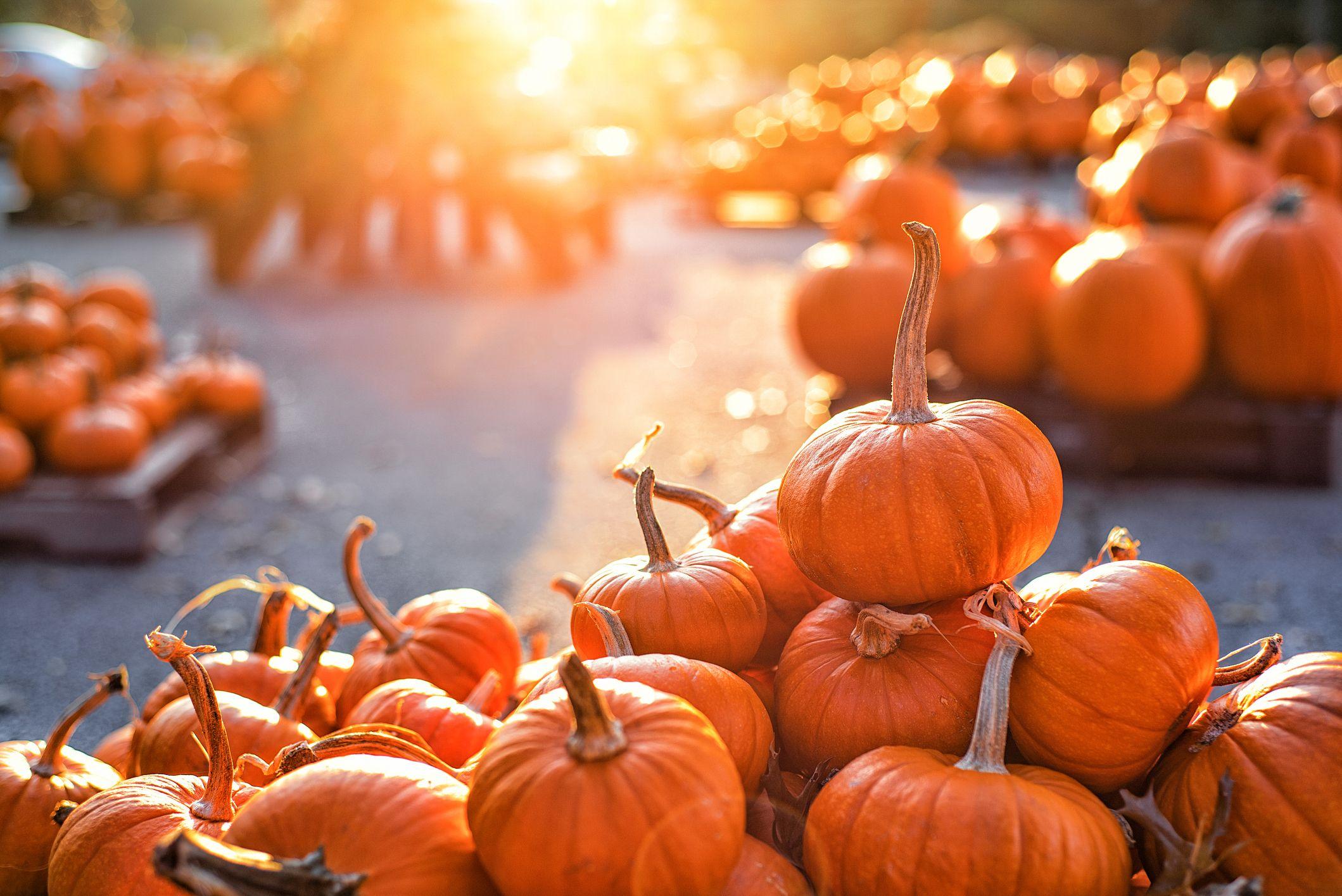 Pumpkin Nutrition Best Pumpkin Health Benefits Say Dietitians
