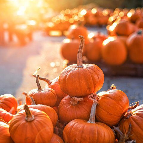 pumpkin nutrition benefits