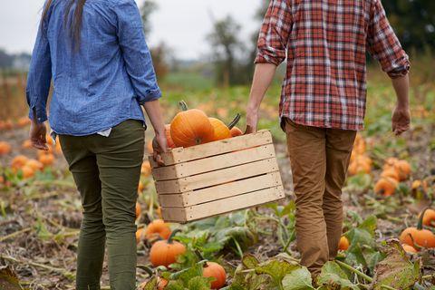 pumpkins on the grow