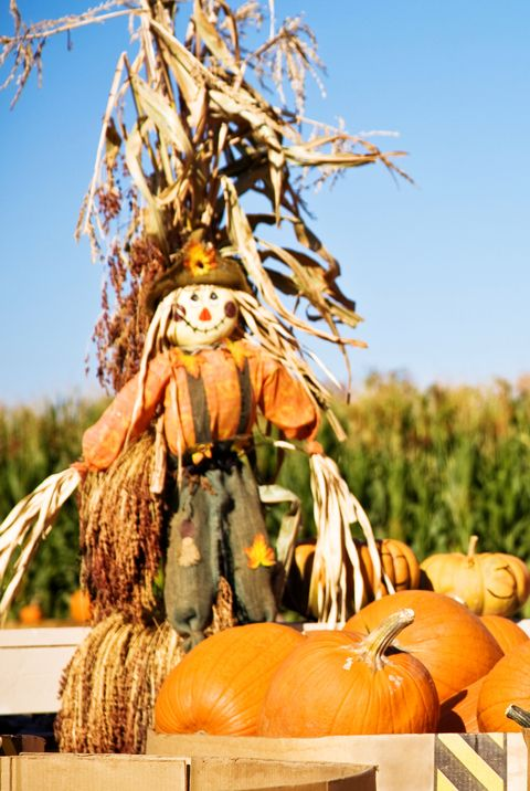 fall activities pumpkins and scarecrow