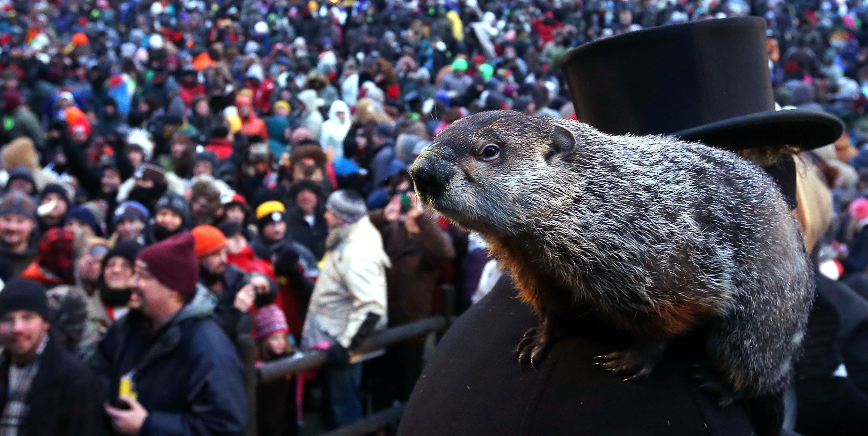 The Weird Way Groundhog Day (and Punxsutawney Phil!) Came to America