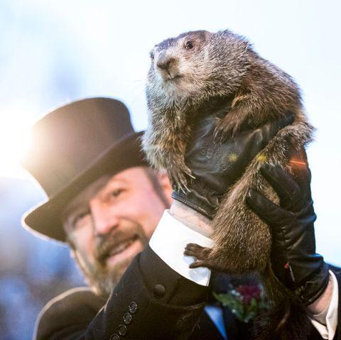 Punxsutawney Phil Groundhog Day Holiday Tradition