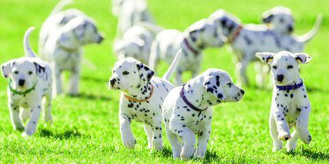 Puppy Mill legislation California