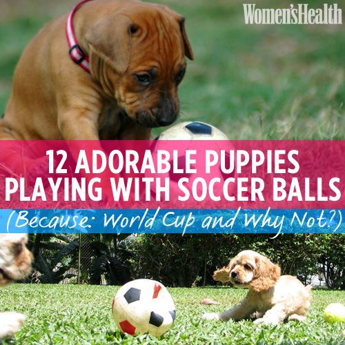 12 Adorable Puppies Playing With Soccer Balls (Because: World Cup and Why Not?)
