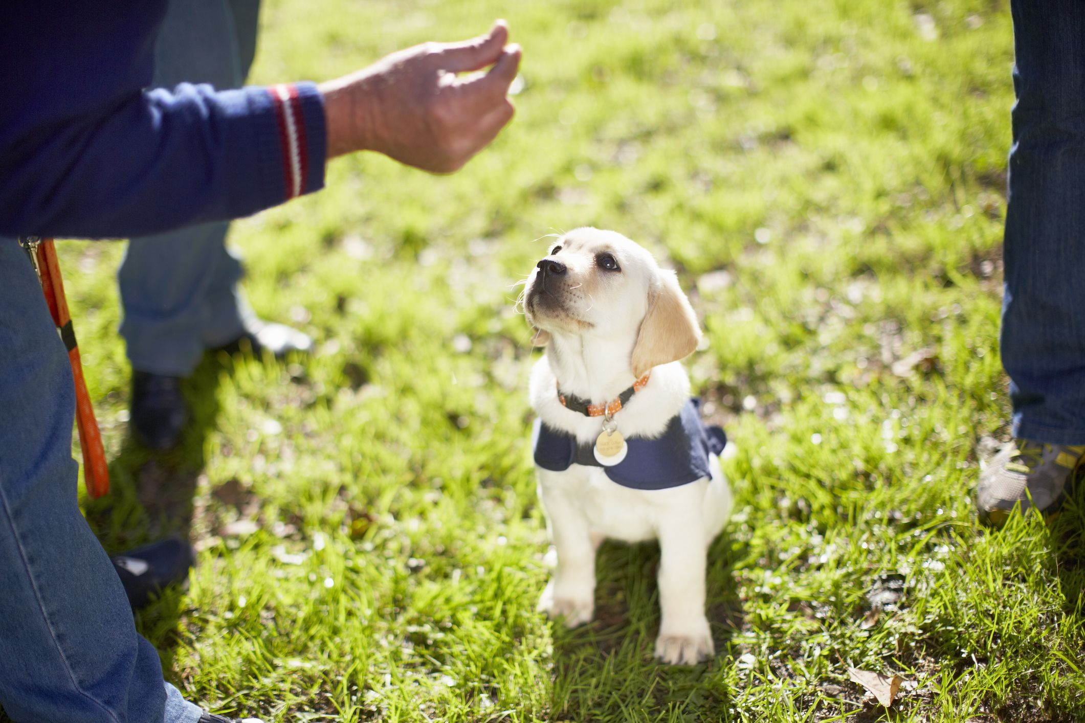 Adorable guide dog puppies go viral after training night at the theatre