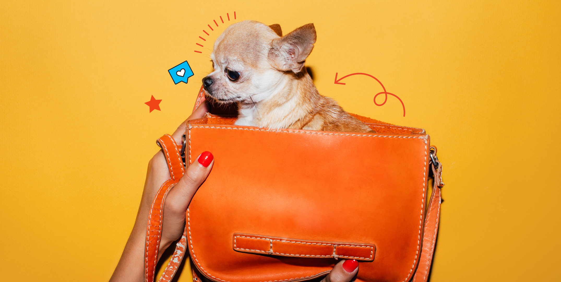 The Best Dogs For Apartment Living