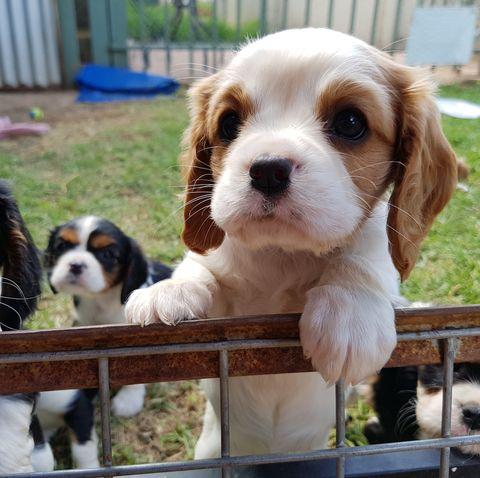 close up of puppy in garden