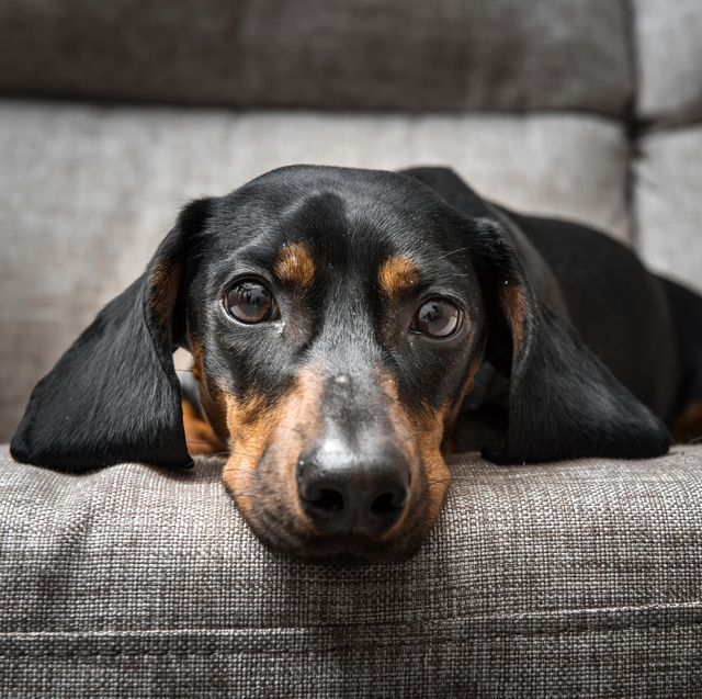 8 signs your dog is stressed, according to a vet
