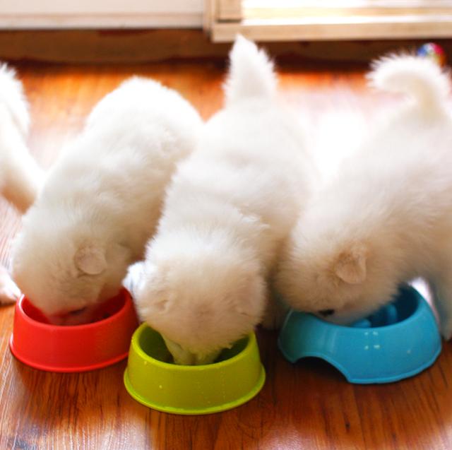 puppy food best 2020