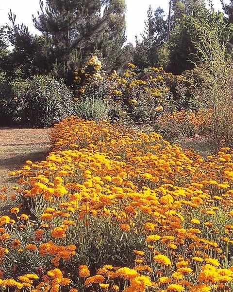 jardín de flores en color oro