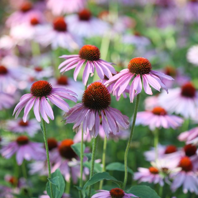 20 Best Perennial Flowers And Plants For Your Garden In 2020