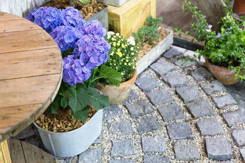 Purple flower in a flowerpot on stone blocks floor