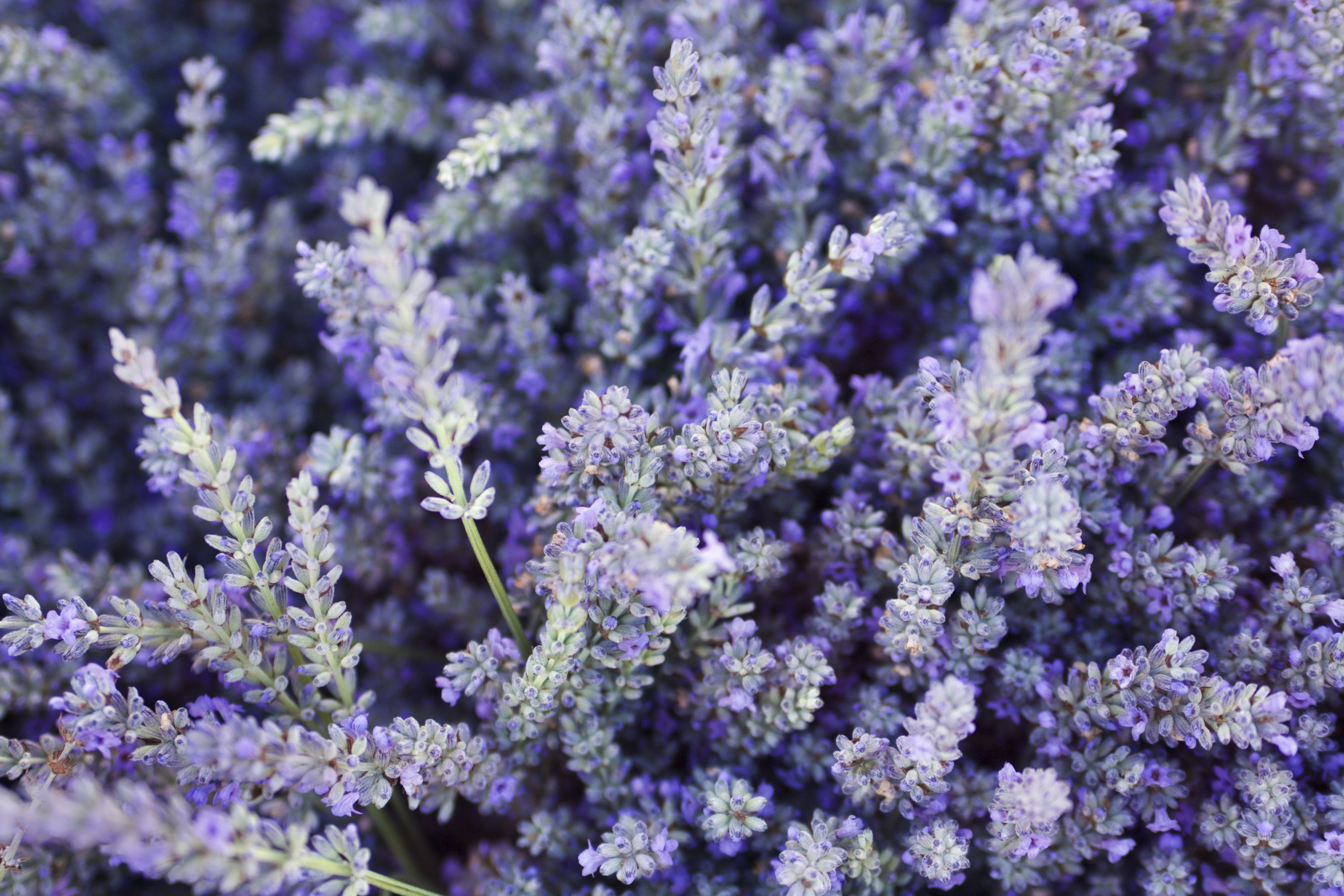 7 plants that help to reduce stress
