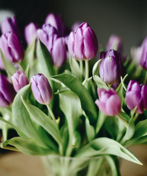 Acerca de tulipanes morados en el jarrón
