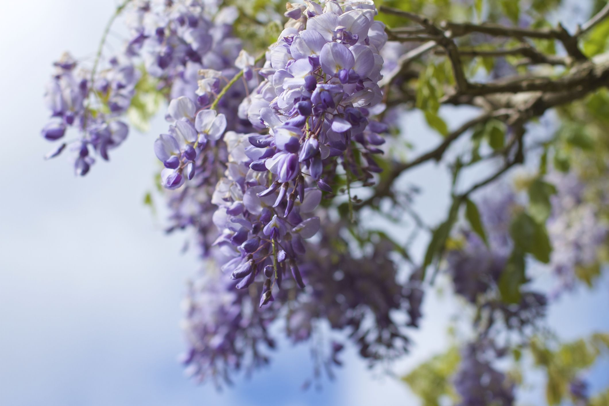 9 poisonous plants that could be lurking in your garden