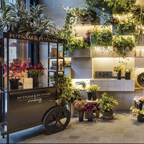 Floristry, Property, Building, Architecture, Real estate, Flower, Plant, Floral design, House, Facade,