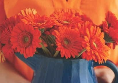 Petal, Flower, Red, Orange, Cut flowers, Floristry, Flowering plant, Flower Arranging, Floral design, Electric blue,