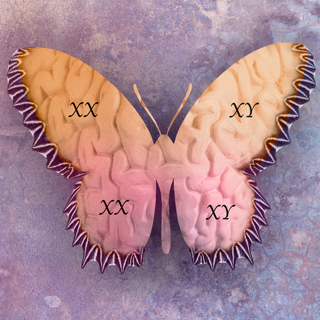 butterfly with brain texture overlay