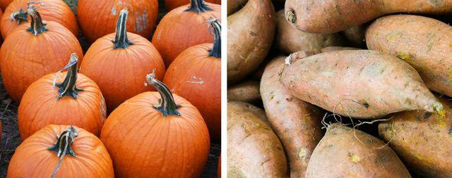 pumpkin vs sweet potato
