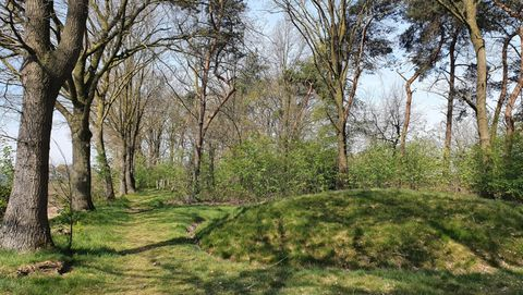 bos in brabant