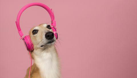 hond met koptelefoon op