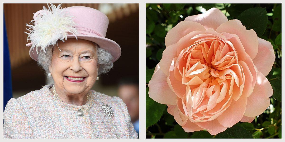 queen elizabeth flower 1588091006 jpg?crop=1 00xw:1 00xh;0,0&resize=1200:*.'
