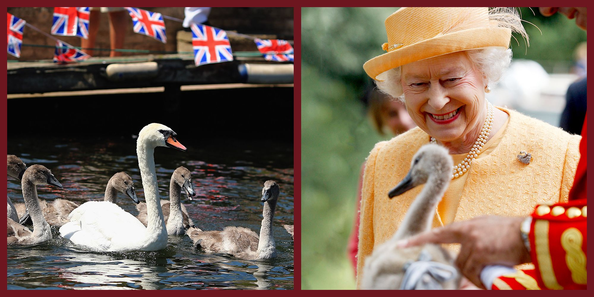 Queen Elizabeth Owns All the Unmarked Mute Swans in the UK