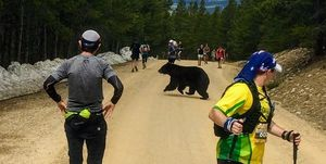 bear jumps out on marathon runners