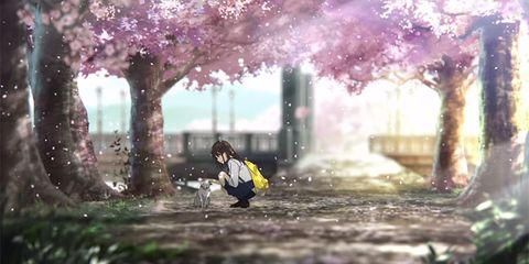 quiero comerme tu pancreas pelicula critica anime