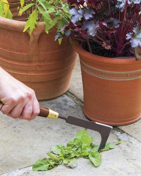 quitar las malas hierbas