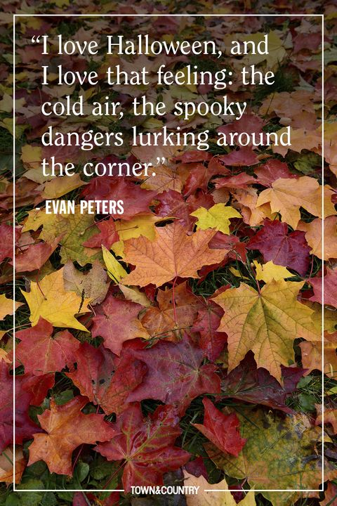 Leaf, Black maple, Plant, Tree, Flower, Maple leaf, Plane, Deciduous, Sweet gum, Autumn,
