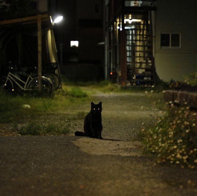 京都の街中で出会ったネコたち