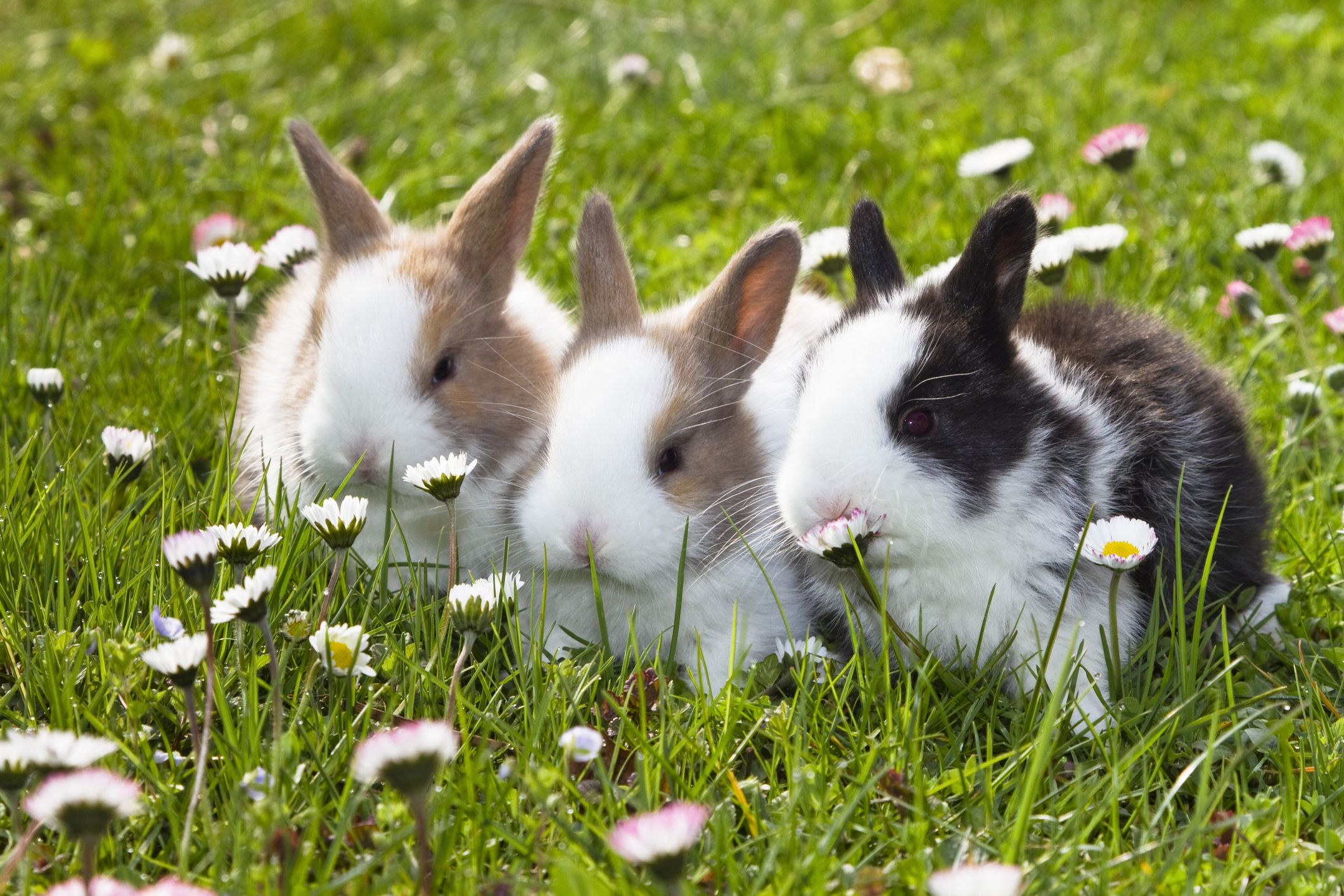 The 15 Best Rabbit Breeds - A Complete Breed Guide to Adopting a Bunny