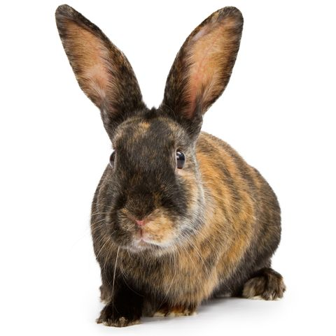 The 15 Best Rabbit Breeds A Complete Breed Guide To Adopting A Bunny