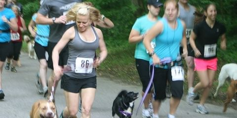 Dogs in Road Races
