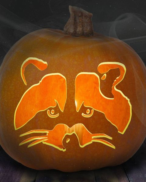racoon pumpkin