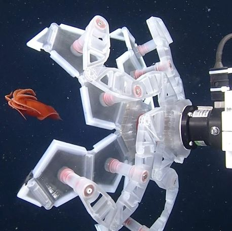 the rotary actuated dodecahedron rad sampler preparing to close its grippers around a fish