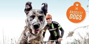 Bicycling's Raddest Dogs